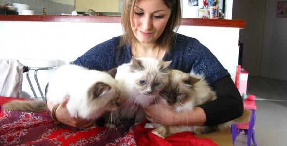 Plus de 300 chats à découvrir dimanche à Reims !