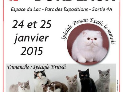 Salon du Chat à Bordeaux
