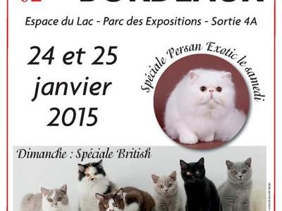 Salon du Chat à Bordeaux